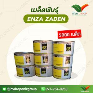เมล็ดพันธุ์ Enza Zaden 5000 เมล็ด