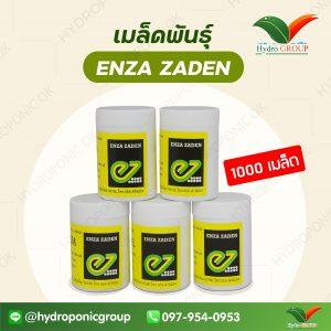 Enza Zaden 1000 เมล็ด