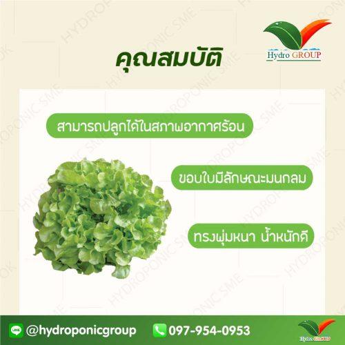 กรีนโอ๊ค พรีเซีย (Green Oak Plezir)